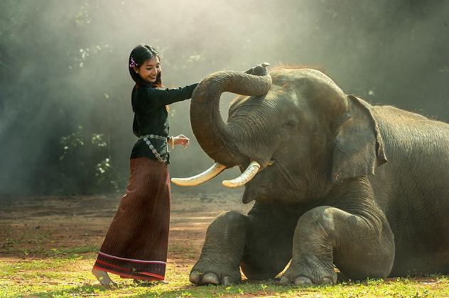 Circle of the Elephant