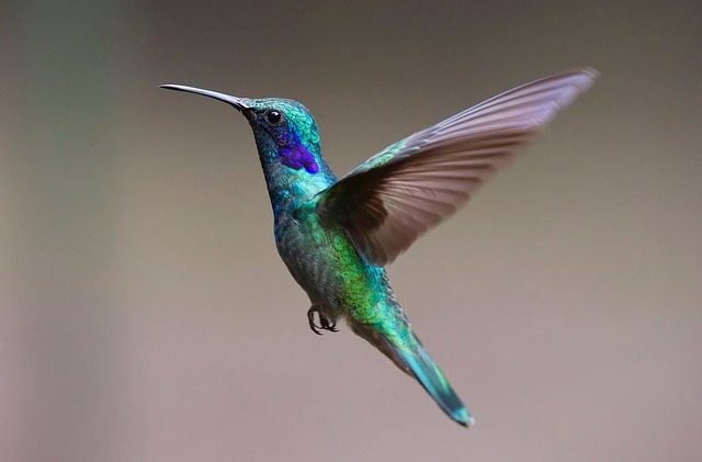 Hummingbird Remote – new equipment for Blue Planet