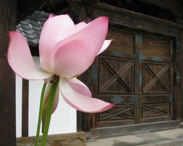 [German] Stätten des Lotus: Juwelentor - ein Landmarkenprofil der Wilden Gestade